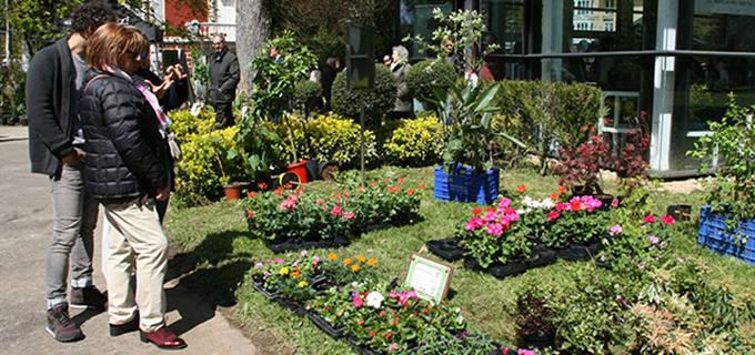 Semilla para el Cambio estará este domingo en el Mercado de flores y plantas de Güeñes